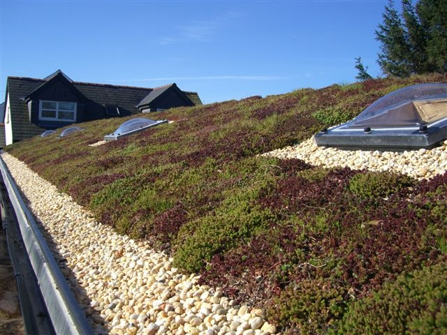 Green Roofs Peter Dodds Roofing Maintenance Ltd